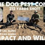 Prairie Dog Pest Control with Fx Impact and Wildcat MK3