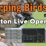Chirping Birds FX Made With Ableton Live Operator