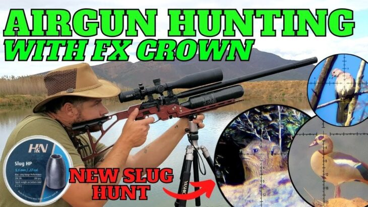 AIR GUN HUNTING WITH FX CROWN I DASSIE AND DOVE PEST CONTROL I SABER TACTICAL CHASSIS FIELD TEST